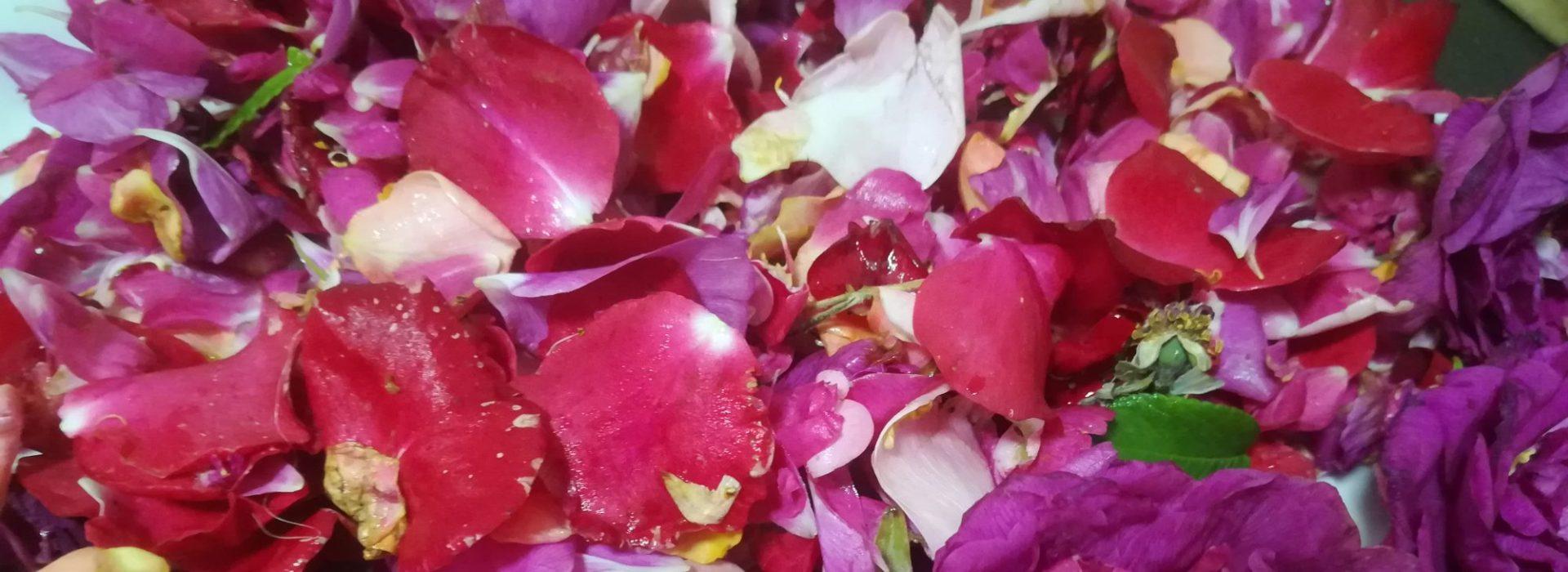 Rose Hyvän olon hoitola
